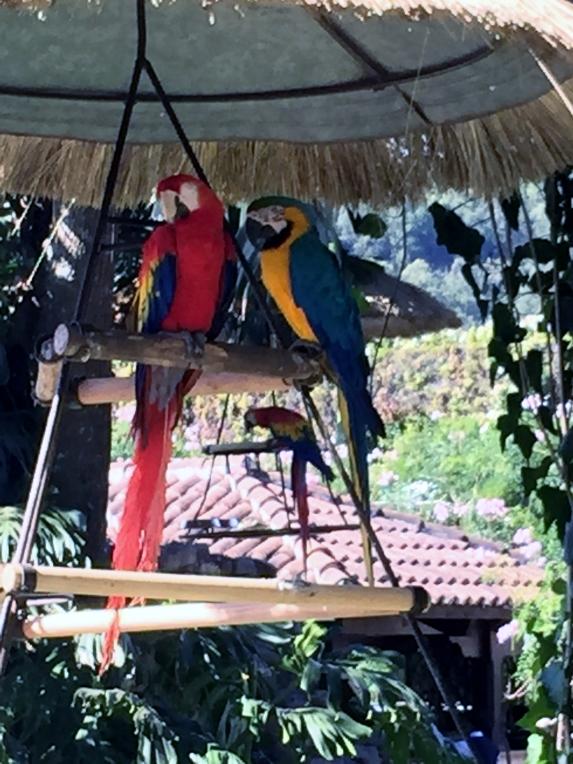 Some parrots