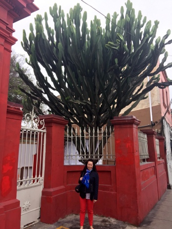 Biggest cactus either of us have ever seen!