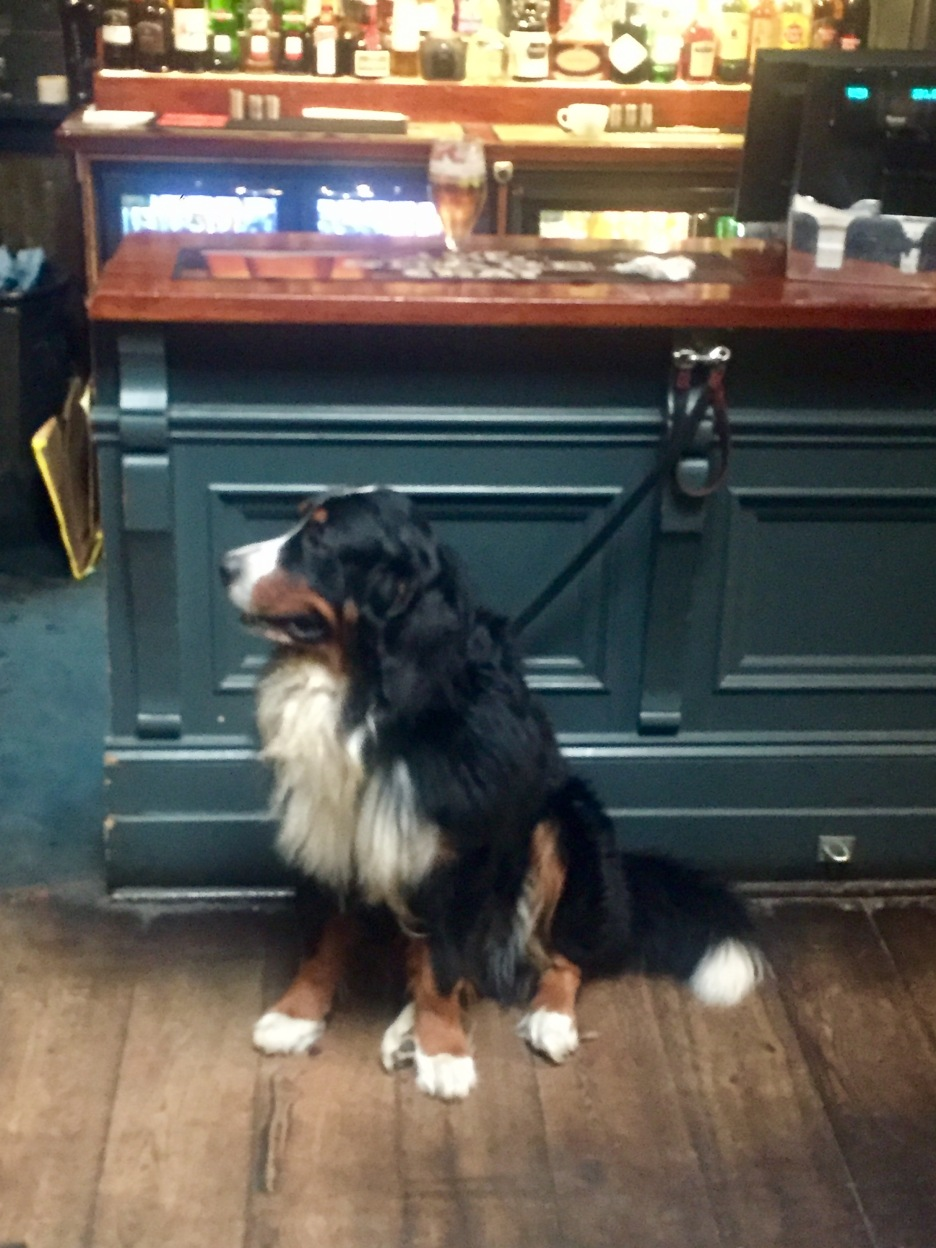 This dog was in the bar and it was a lot bigger than picture portrays