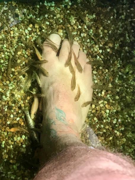 Fish love my feet