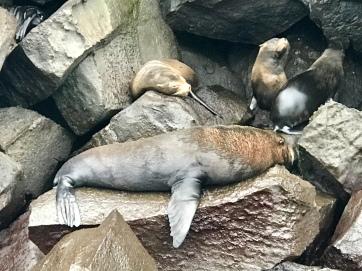 Some sea lions lazing around