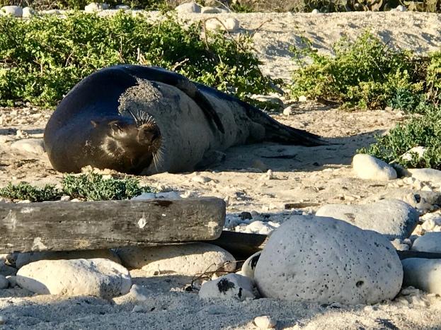 Life's pretty sweet when you're a sea lion