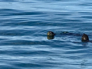 More sea turtles swimming around
