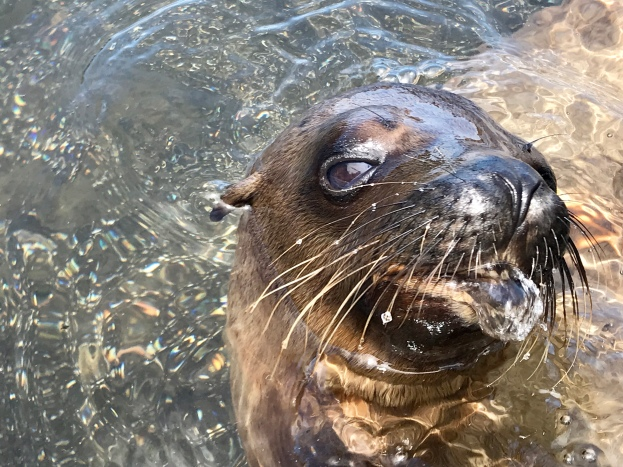 Not sure if that is a seal-snot bubble or not